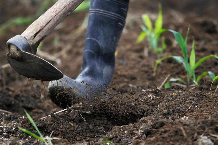 Soil Amendments and Produce – What's Your Risk?